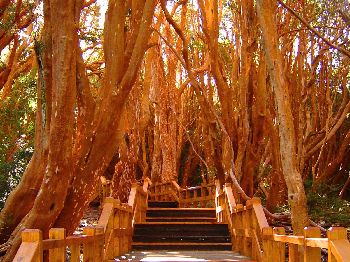 Parque-Nacional-los-Arrayanes-2