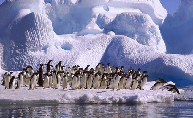 antártida-argentina-4