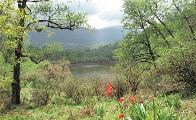 parque-nacional-campo-los-alisos-3