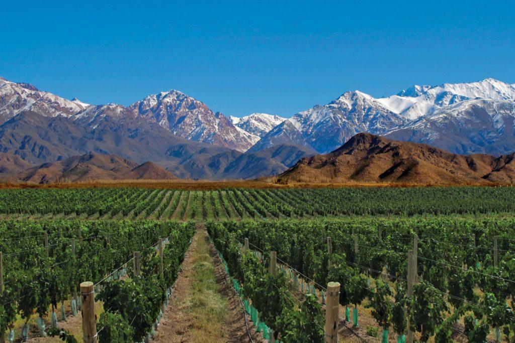 ruta del vino mendoza