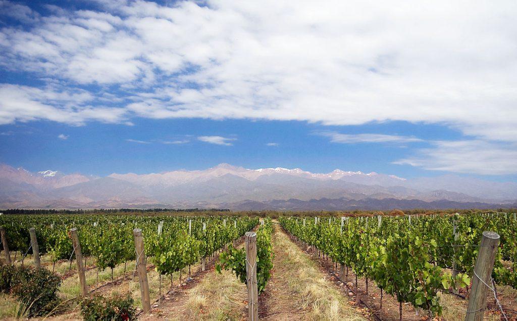ruta-del-vino-mendoza-3